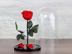 Роза в колбе Премиум, красная